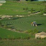 tareas agrícolas